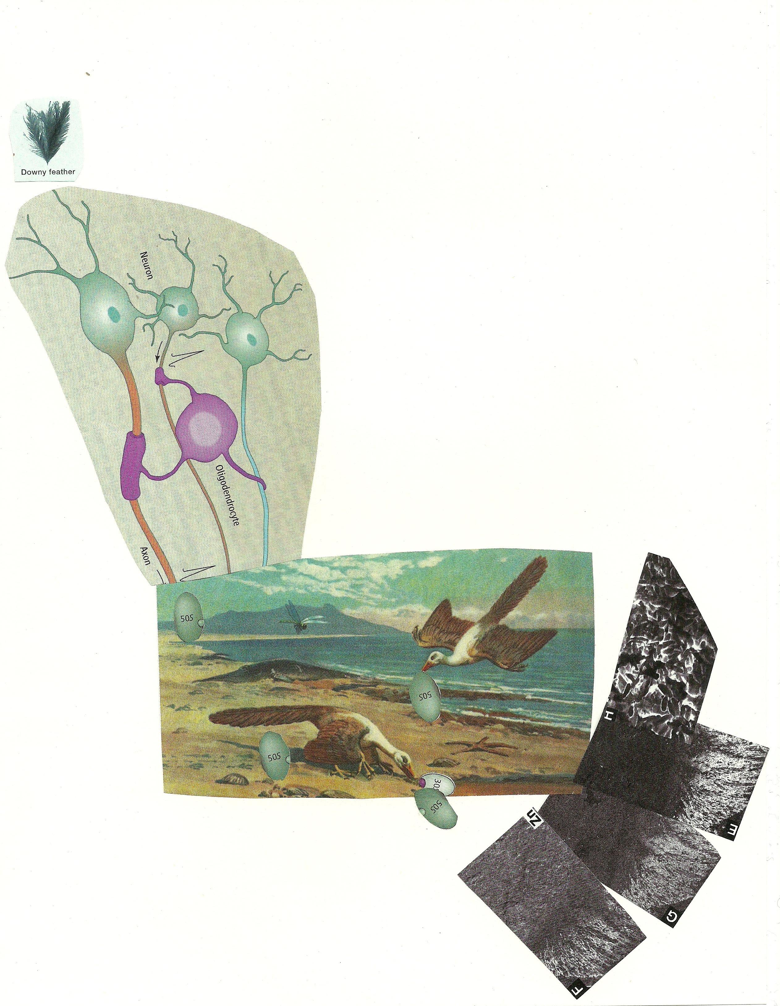 Ève K. Tremblay, Neurones et zoizos pré historiques, 2012, techniques mixtes, mixed media, 11