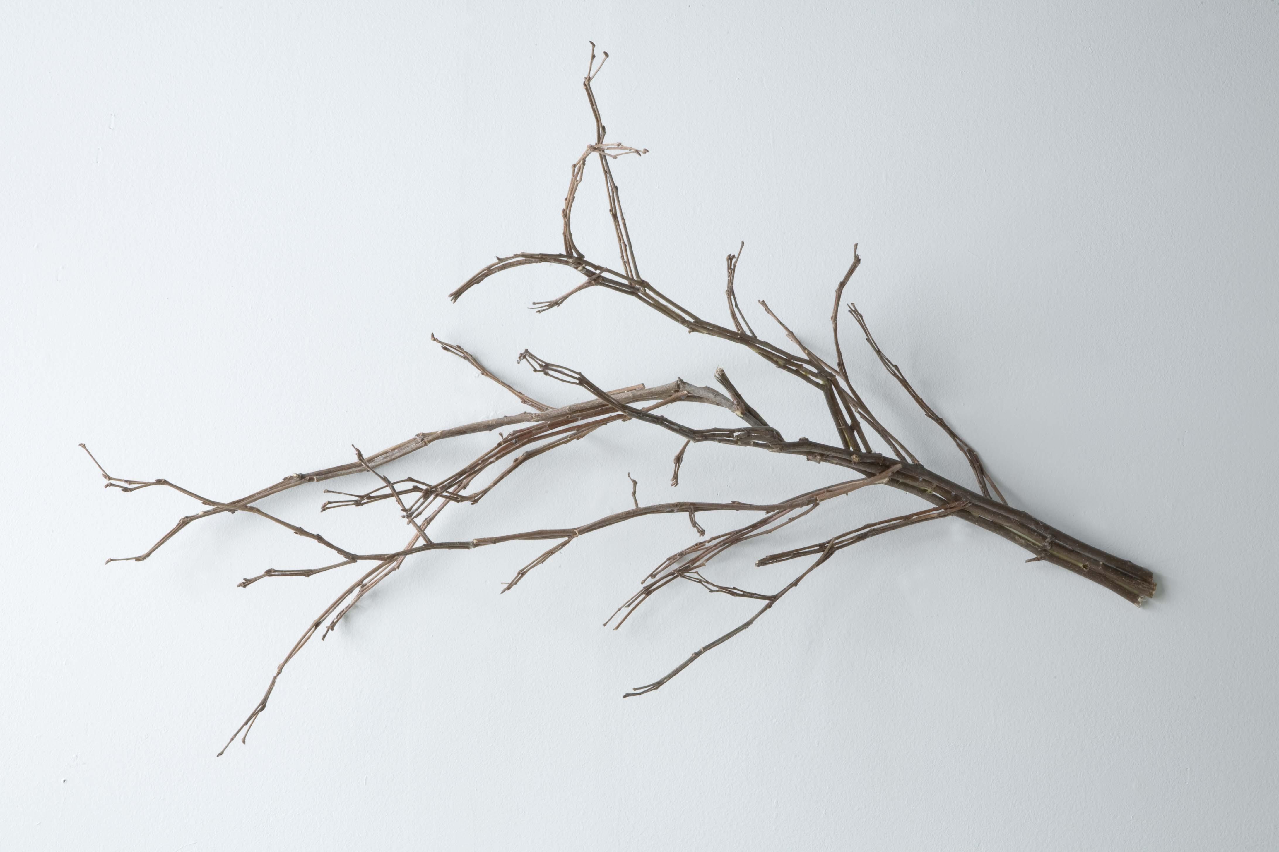 Jonathan Plante, Treesome, 2008, bois, wood,19.5
