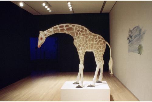 Trevor Gould, Nubian Giraffe after J-L Agasse, 1998, installation, Musée d'art contemporain de Montréal