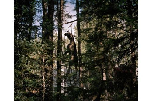"""Benoit Aquin, Suspension (série La chasse), 2002 Impression numérique à pigments de qualité archive Éd. 6 : 74 x 91 cm (29″ x 36"""")"""